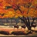 関西でドライブデートするならここ!−奈良編−のサムネイル画像